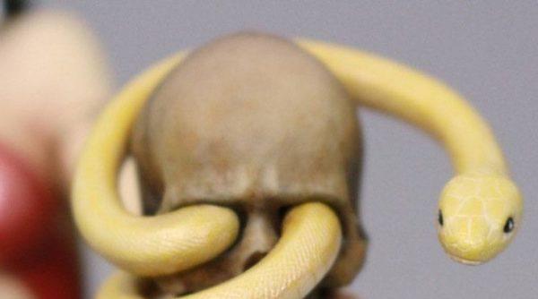 VAMPIRELLA (ZOW) STATUE – 1-6 - MAMEGYORAI - DYNAMITE ENTERTAINMENT - 28 CM – (9) - 725130258281 – kingdom-figurine.fr